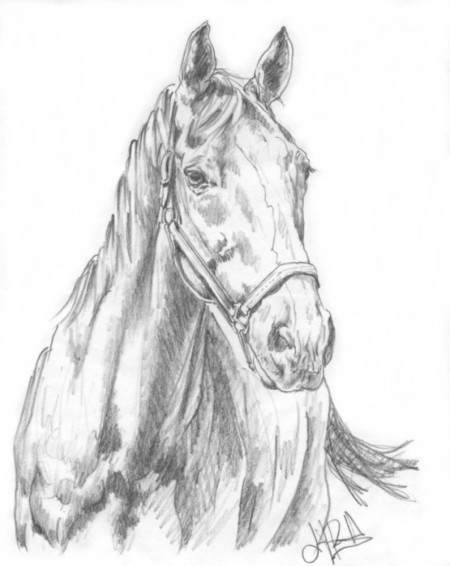 Hooligan - Preliminary Sketch, aged Thoroughbred Gelding